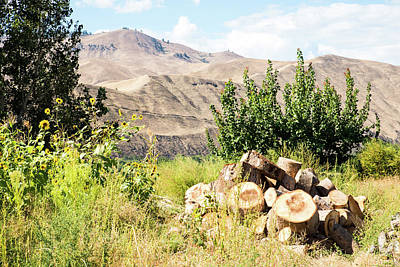 Photograph - Dusty Hills And Firewood  by Tom Cochran