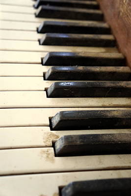 Photograph - Dusty Ivories by Kathy Barney