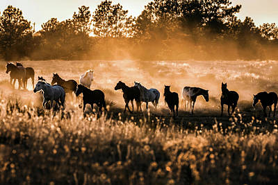 Photograph - Dusty Mustang Sunset by Dawn Key