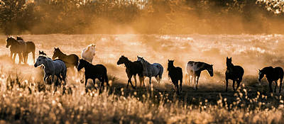 Photograph - Dusty Mustang Sunset Panorama by Dawn Key