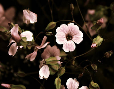 Dusty Pink Original by Cathie Tyler
