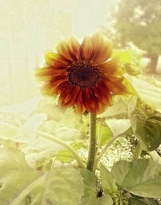 Photograph - Dusty Retro Sunflower by Amanda Smith
