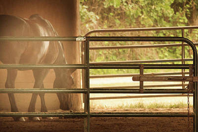 Photograph - Dusty Stable Horse by Joni Eskridge