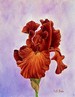 Painting - Dutch Chocolate Bearded Iris by Charlotte Bacon