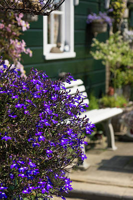 Photograph - Dutch Country Charm - Fabulous Purple Flowers by Georgia Mizuleva
