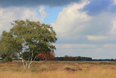 Dutch Landscape National Park Dwingelderveld Art Print