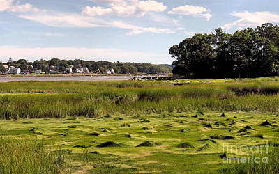 Photograph - Duxbury Marshes  by Janice Drew