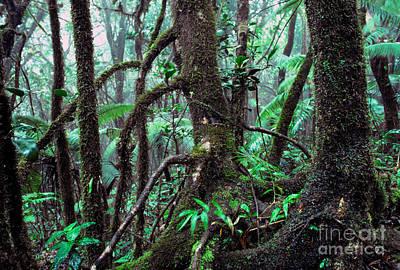Dwarf Forest Mist El Yunque Art Print by Thomas R Fletcher