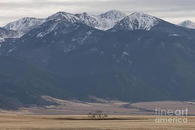 Montana Photograph - Dwarfed by Carolyn Brown