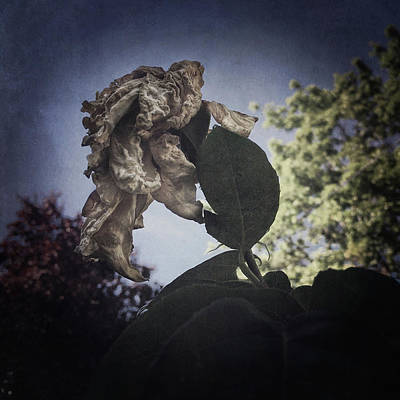 Photograph - Dying Of A Beauty by Siegfried Ferlin