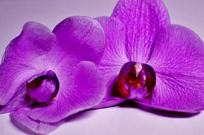 Photograph - Dying Orchids by Eileen Brymer