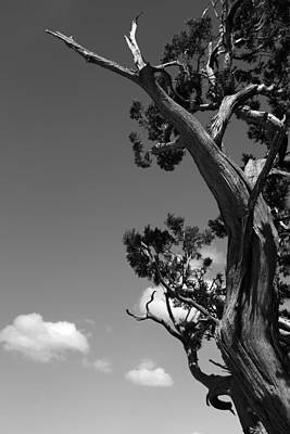 Photograph - Dying Tree And Clouds 2 Bw by Mary Bedy
