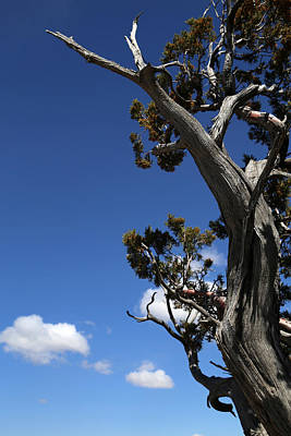 Photograph - Dying Tree And Clouds 2 by Mary Bedy