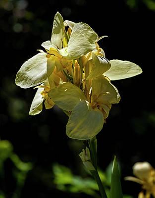 Photograph - Dying Yellow Flower by Robert Ullmann