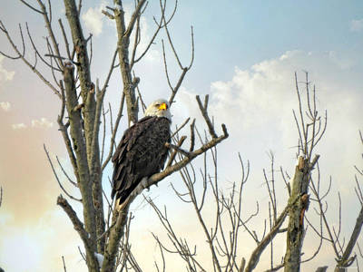 Photograph - Eagle 2 by Brenda Conrad