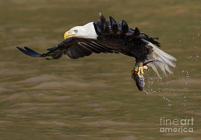 Photograph - Eagle 3814 by Art Cole