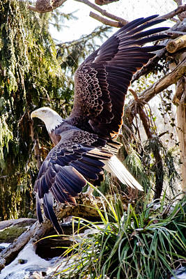 Nature Photograph - Eagle 9 by Gary Adkins