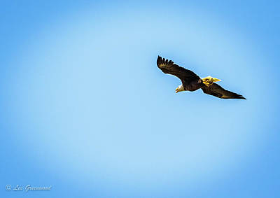 Photograph - Eagle Above by Les Greenwood