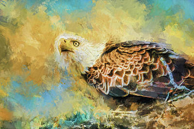 Photograph - Eagle Alerted by Jai Johnson