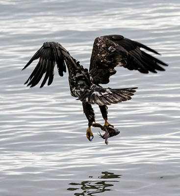 Photograph - Eagle And His Fish by Gloria Anderson