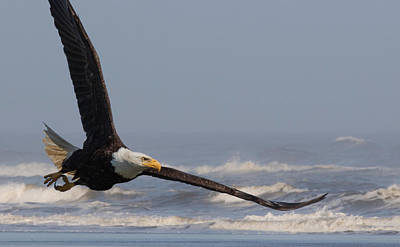 Photograph - Eagle And Surf by Angie Vogel