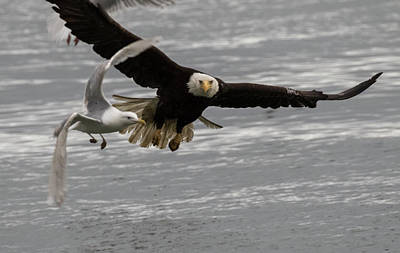 Photograph - Eagle And The Gull by Gloria Anderson