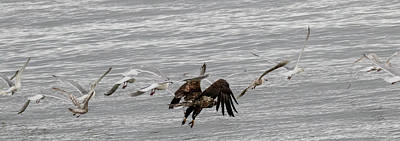 Photograph - Eagle And The Gulls Panorama by Gloria Anderson