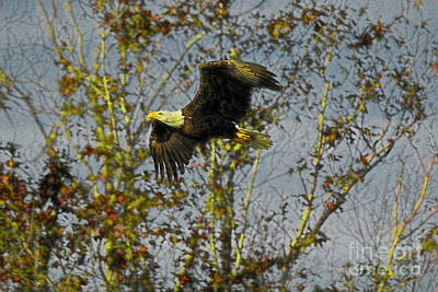 Painting - Eagle And Trees by Deborah Benoit