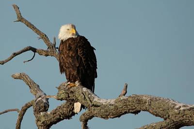 Photograph - Eagle At Dawn by Linda Shannon Morgan