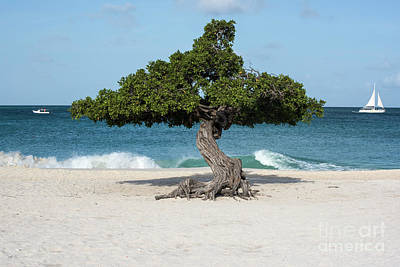 Photograph - Eagle Beach Divi by Judy Wolinsky