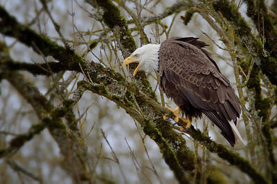 Photograph - Eagle Calling by Craig Strand