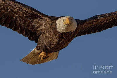 Photograph - Eagle Close Up by Beth Sargent