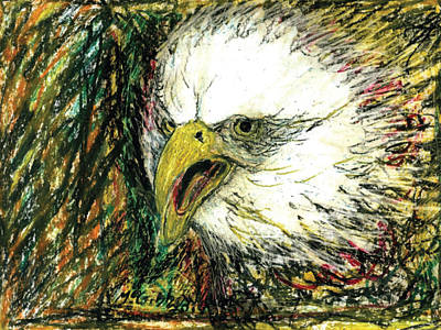 Drawing - Eagle by Dan McGibbon