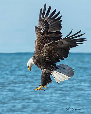 Eagle Dive Art Print by CR  Courson