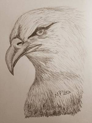Drawing - Eagle Drawing 1 by Maria Urso