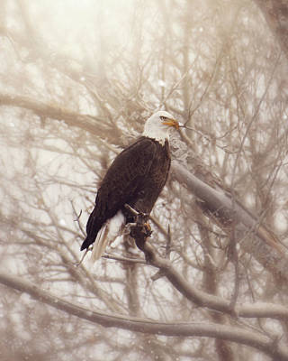 Photograph - Eagle by Erica Kinsella