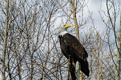 Photograph - Eagle Eye by Alana Thrower