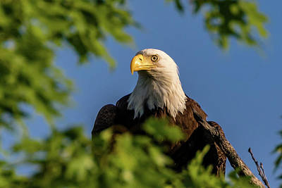 Photograph - Eagle Eye by Allin Sorenson