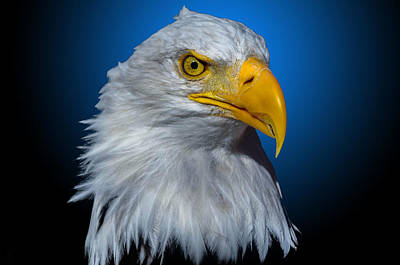 Photograph - Eagle Eye by Brian Stevens
