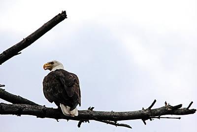 Photograph - Eagle Eye by Debbie Oppermann