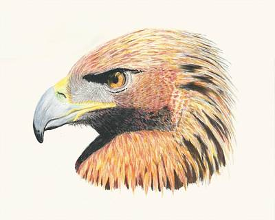 Drawing - Eagle Eye  No Border by Stephanie Grant
