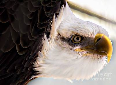 Eagle Eye Art Print by Sherman Perry