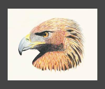 Drawing - Eagle Eye by Stephanie Grant