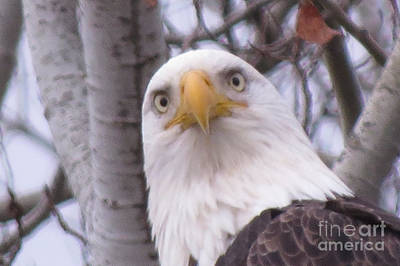 Photograph - Eagle Eyes by Mary Mikawoz