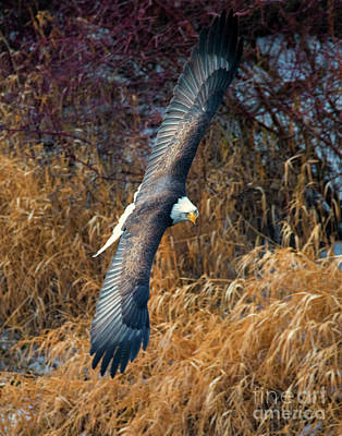 Photograph - Eagle Eyes by Mike Dawson