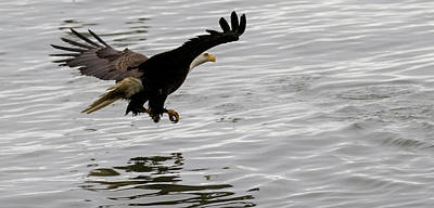 Photograph - Eagle Fishing by Gloria Anderson