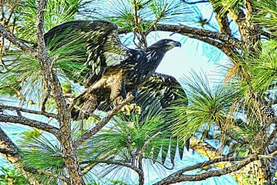 Pine Needles Photograph - Eagle Fledgling 2017 by Deborah Benoit