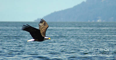 Photograph - Eagle Fly By by Cameron Wood