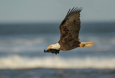 Photograph - Eagle Flying Along The Surf by Angie Vogel