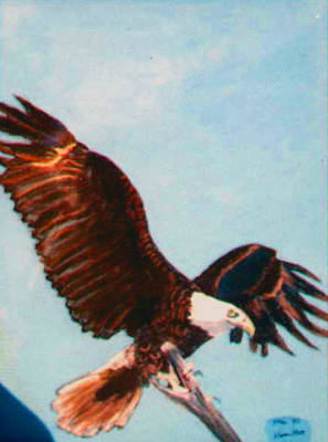 Eagle For Flight Art Print by Stan Hamilton